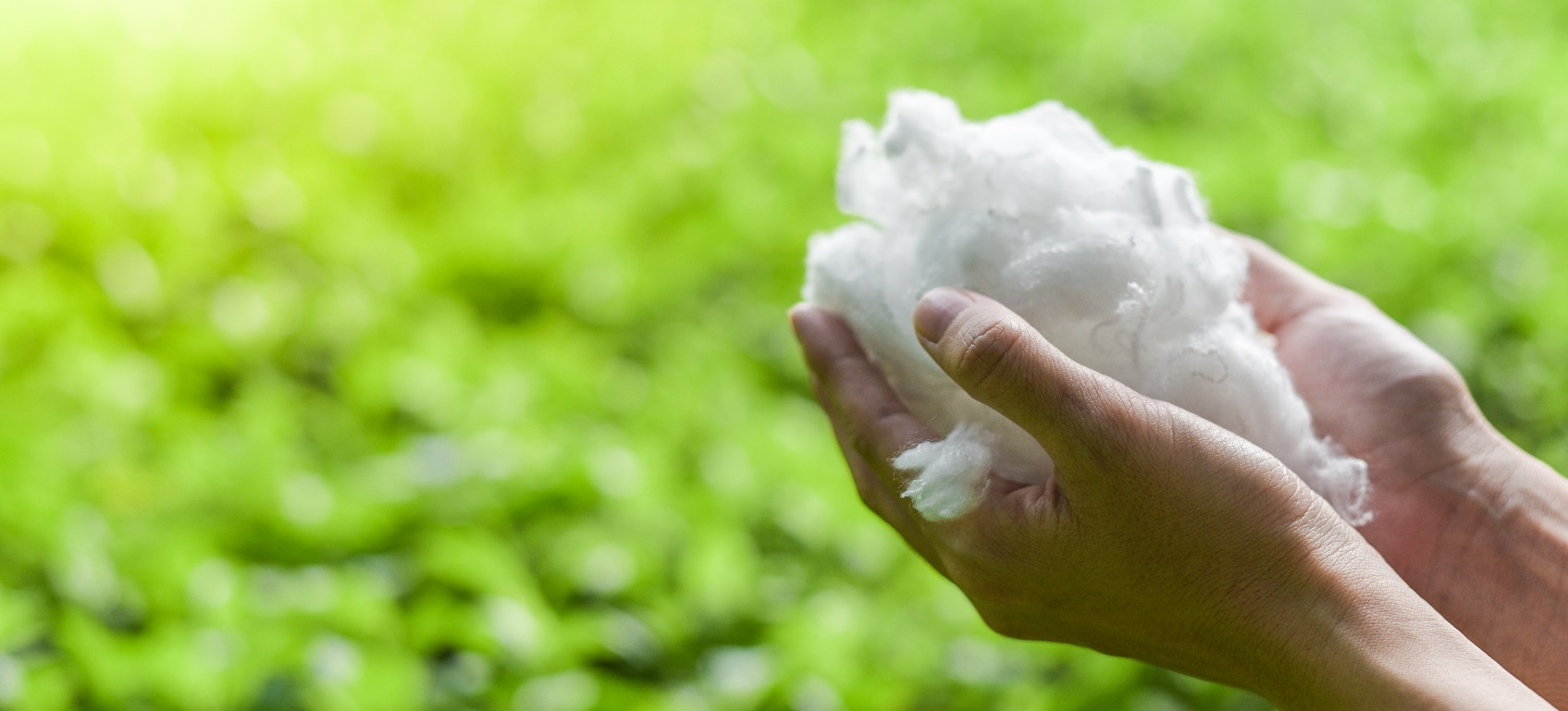 Hands,Holding,Polyester,Staple,Fiber,With,Blur,Green,Grass,Background